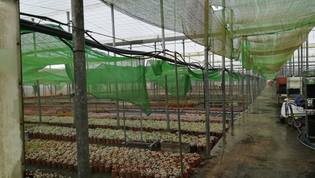 Succulent plant greenhouse - 19 March 2019